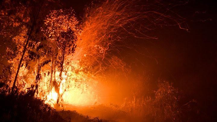 Lakukan Penyelidikan Penyebab Kebakaran Lahan di Sumsel, KLHK Segel 8 Peruhasaan