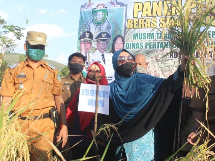 Bersama Petani, Erna Rasyid Taufan Turun ke Sawah, Menyabit Hingga Kemudikan Mesin Panen Padi